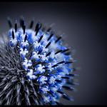 Blue Armada