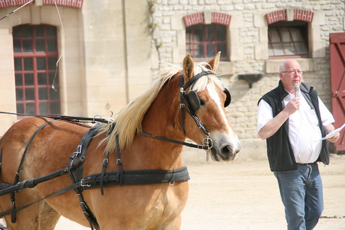 horses horse cheval driving carriage 300views 300 each equine chevaux drafthorse ceffylau trait champagneardenne eich heavyhorse attelage capall over300views trekpaard chevaldetrait equinephotography ardennais zugpferd capaill kezeg equinephotographer attelages montierender harasnational traitardennais harasnationaldemontier