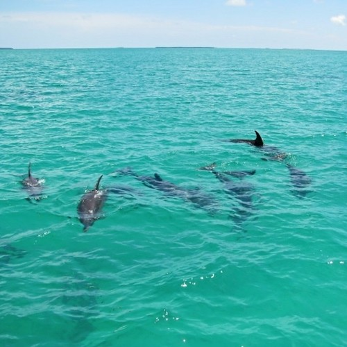 eco_discovery_dolphins_playground_sq | by keywestsailingadventure