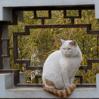 "Small Wild Goose Pagoda ""Temple Cat"", Xi'an 