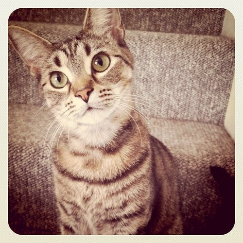 Graham, our crazy & awesome cat | by Christine ™