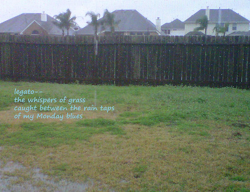 Through the Rain-Studded Screen (Haiga)