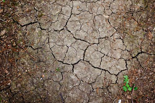 Dry. | by rthakrar