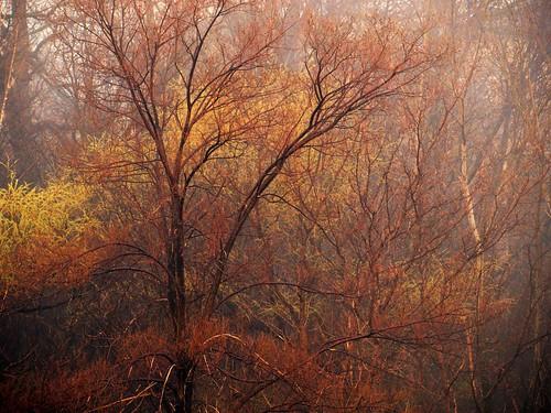 trees toronto ontario canada tree weather fog forest foggy