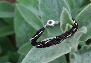Black and Silver on Mullein | by Red Tail Designs