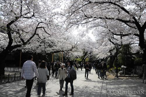 靖国神社.Yasukuni Shrine .東京 日本 Tokyo Japan   by Ari Helminen