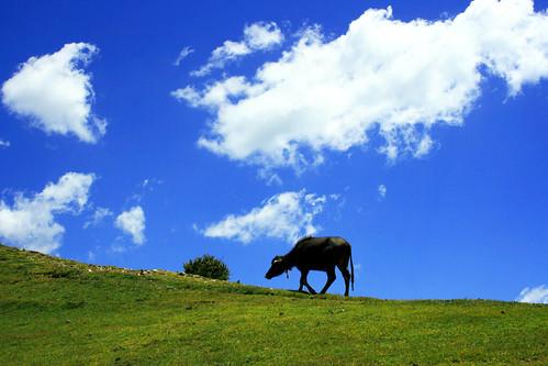 blue sky grass clouds lunch sar ksbukhari dhook nilfari
