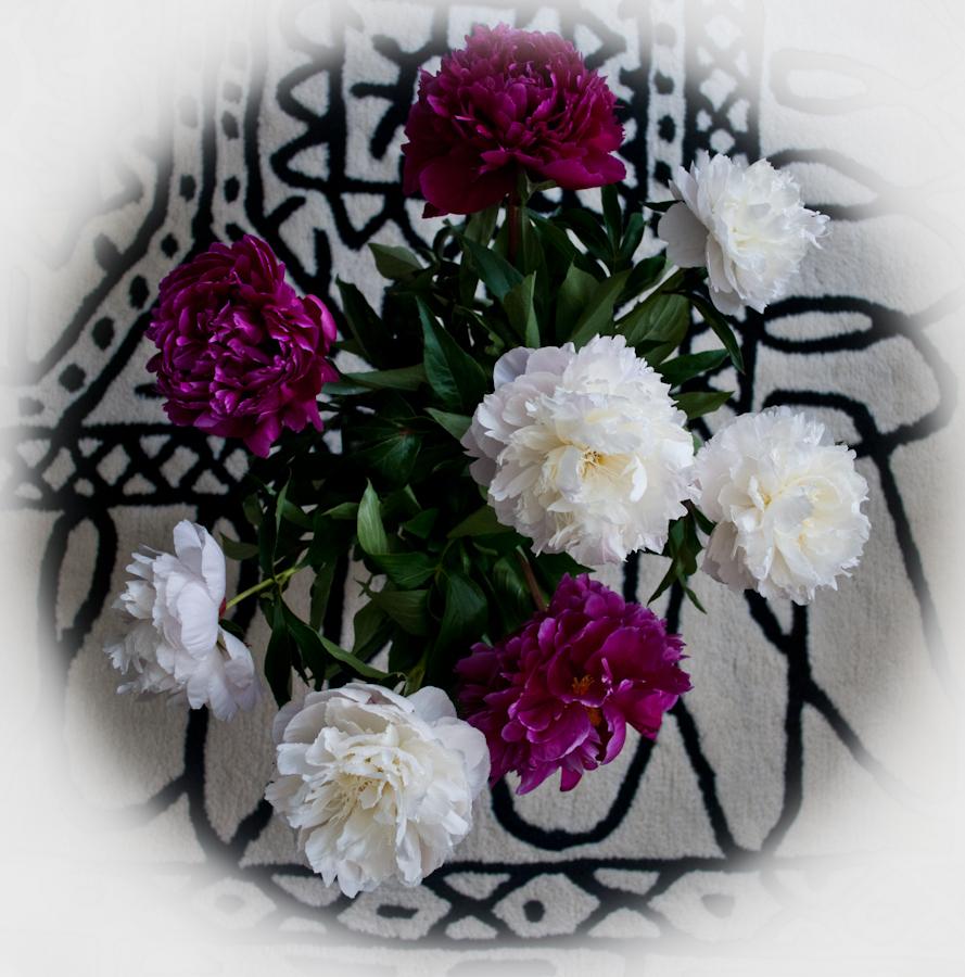 Beautiful flowers Прекрасные цветы - пионы ! DSC_2773