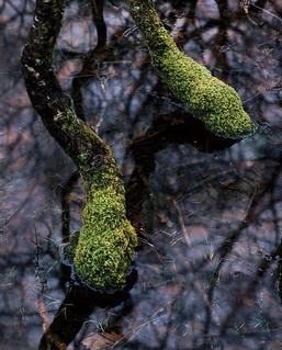 Froggy Feet   by Tim Parkin
