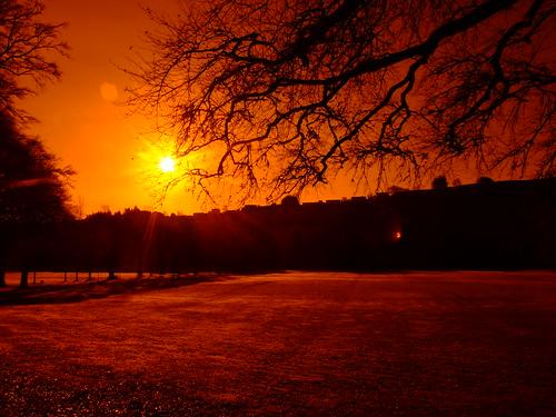 park trees light shadow red orange sun white black tree nature sunshine silhouette yellow sunrise dawn star scotland town village branches apocalypse sunrays lightandshadow borders helios hawick scottishborders roxburghshire apocolyptic wiltonlodgepark redcolour fujifinepixs6500fd westendstar redcolorstarburst