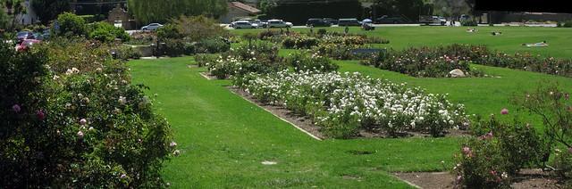 IMG_4377_4 110416 Santa Barbara Postel rose garden from tea corner ICE p3 stitch98