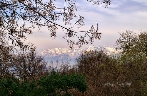 california mountain view riverside peggy botanicgarden ucr snowcappedmountains universityofcaliforniariverside ©allrightsreserved ©peggyhughes