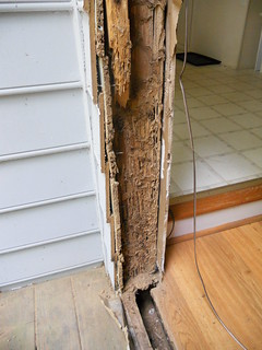 Termite Damage | by cbb4104