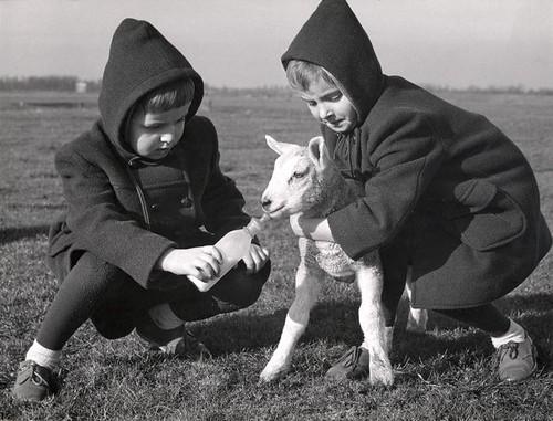 Tweeling geeft lammetje de fles / Twins feeding a little lamb | by Nationaal Archief