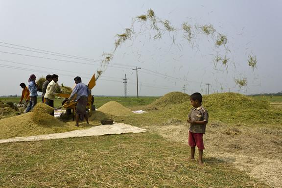 Harvest (photo credit: Alam / Flickr)