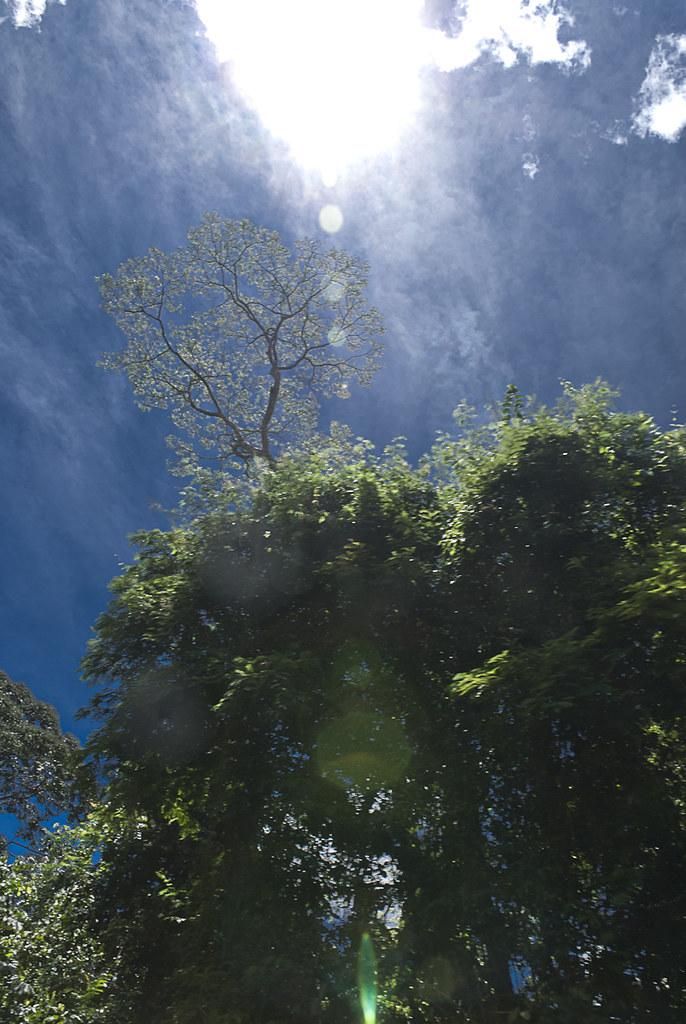Amazonia13