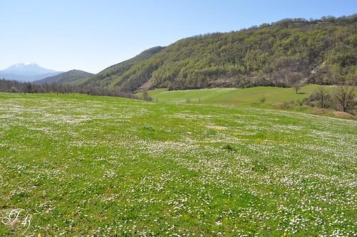 basilicata oasi moliterno oasinaturalisticadelfaggeto
