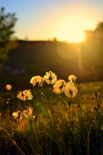 Golden light - Explore #2 - thank you | by JustaMonster