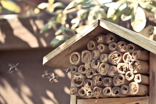 Bee house | by poppet with a camera