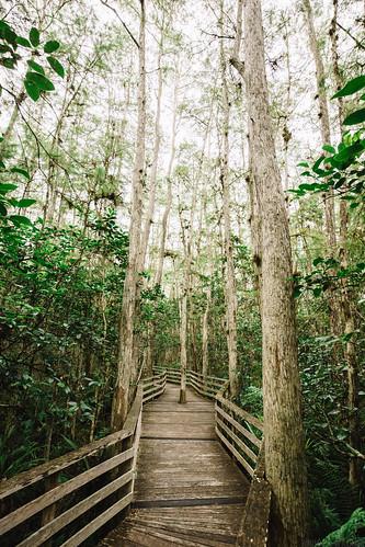 trees tree nature canon landscape outdoors eos is florida wideangle swamp naples boardwalk cypress usm f4 sanctuary audubon 1635mm ultrawideangle f4l 1635l oldcypress auduboncorkscrewswampsanctuary 5dmkiii 5dmk3 5d3 5dmarkiii 5dmark3 adububon oldbaldcypress