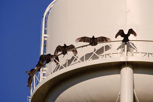 birds animals outdoor towers structures