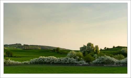 flowers trees sunset france sunrise landscape golden spring sony hour fields l paysage lux sonnar vario junglinster a900 sal2470za sonydslra900 2470mmf28zassm maciejbmarkiewicz sonyzeissvariosonnar247028ssm 49°433254n6°143769e