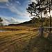 Image: Rothbury Countryside