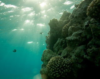 Sunrise on the coral reef, Shark Island, French Frigate Shoals | by USFWS Pacific