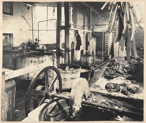 Sutton Forest Butchery. No. 761 George street from Views taken during Cleansing Operations, Quarantine Area, Sydney, 1900, Vol. IV / under the supervision of Mr George McCredie, F.I.A., N.S.W. photographed by John Degotardi Jr. | by State Library of New South Wales collection