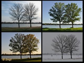 Trees in four seasons | by Degisus