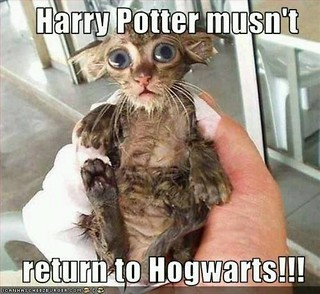 Harry Potter Musn't Return To Hogwarts!!!