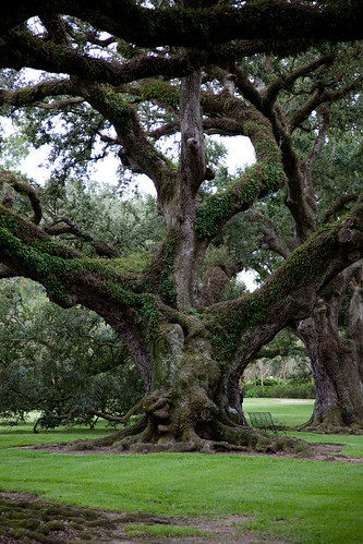 louisiana neworleans plantation oaktrees oakalley roundtripusa