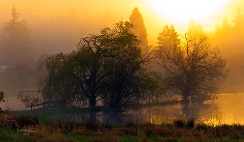 trees mist reflection nature water silhouette fog rural sunrise canon landscape island pond washingtonstate t1i matthewreichel