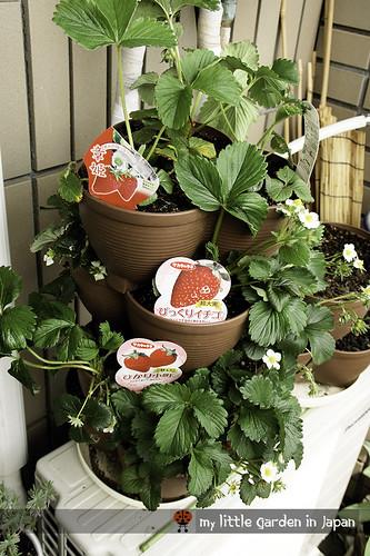 my little garden in japan 2012 2 | by delcasmx