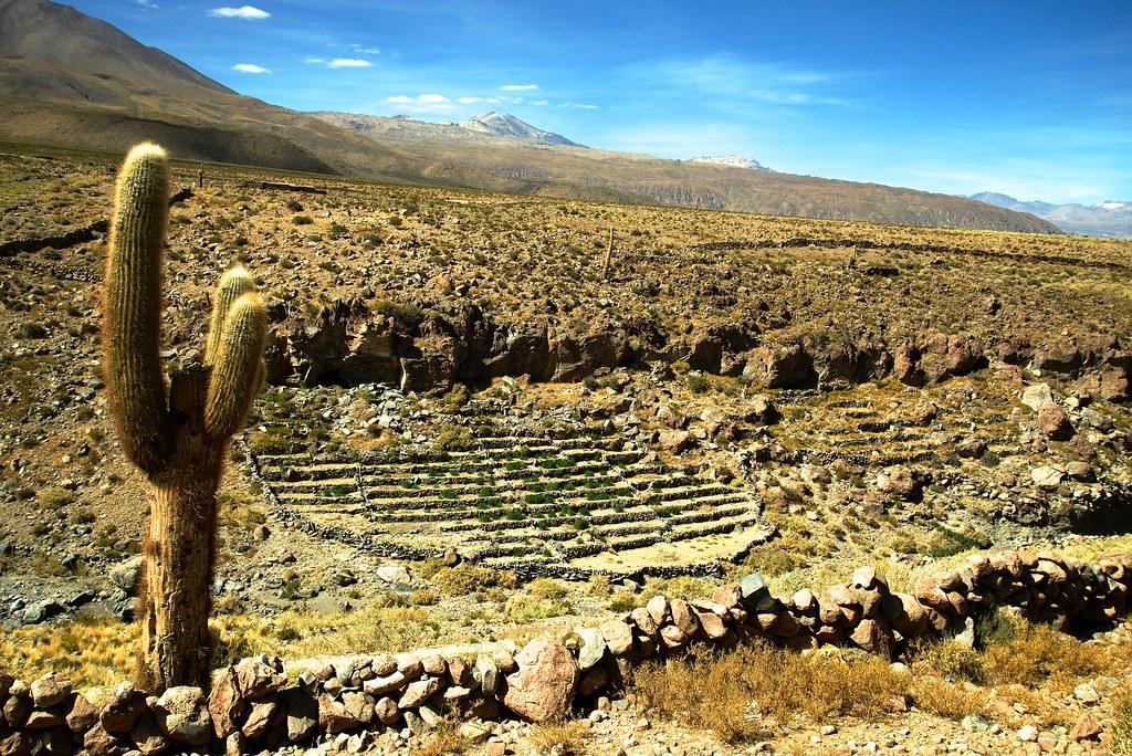 Cupo Terrazas De Cultivo Calama Chile A La Derecha Un