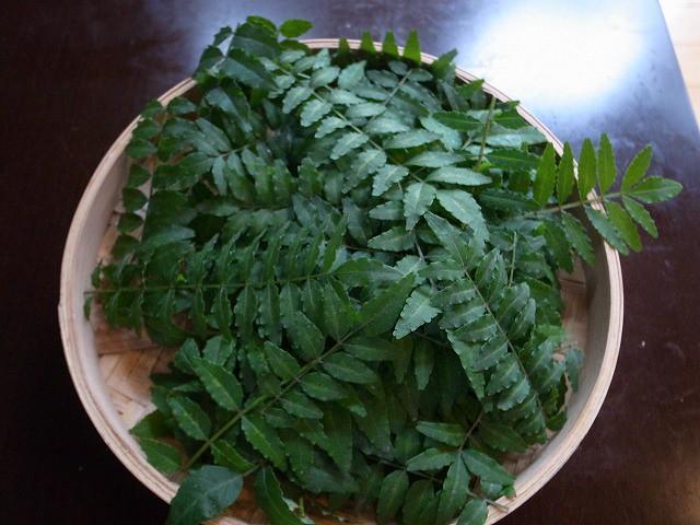 <p>a)山椒の葉を摘んできました。</p>