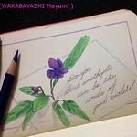 2014_05_05_violet_01_s