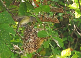 unusual bird nest design... mother feeding young | by al-ien
