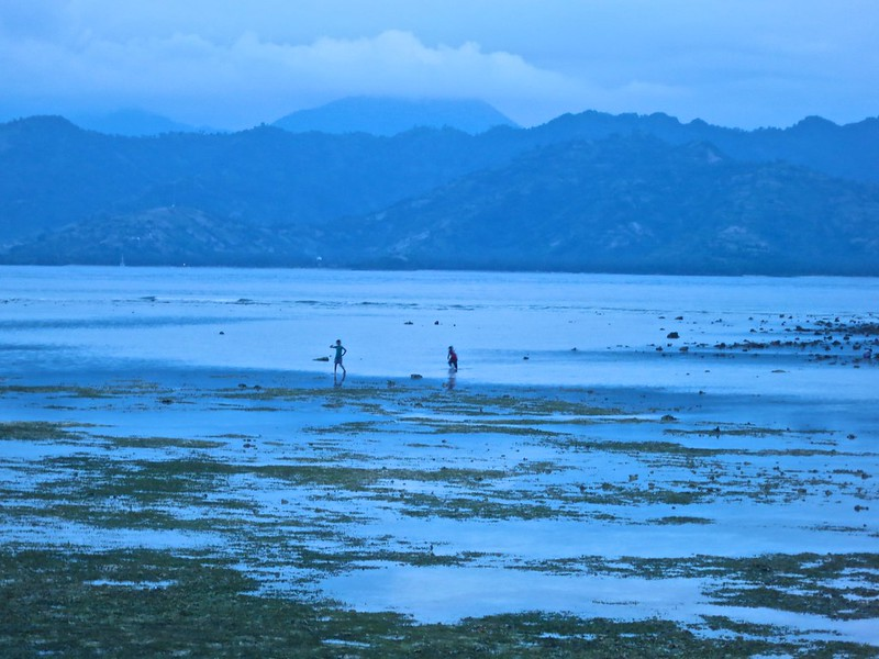 Low tide seafood hunting