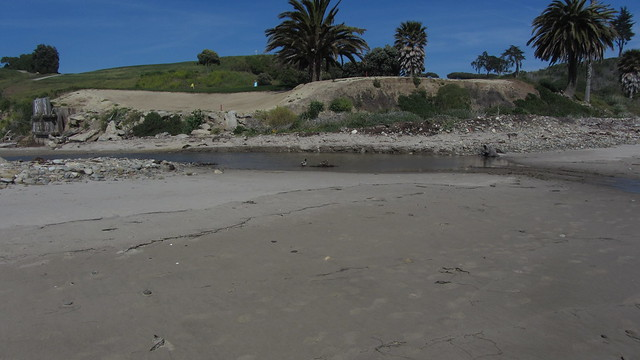 IMG_3104 bell creek slough sandpiper