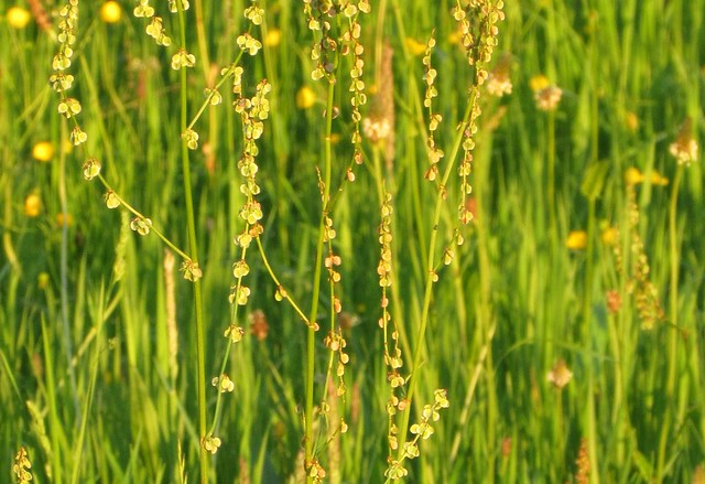 Grass 2 (at sunset)