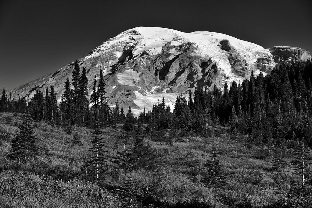 Autumn in Paradise (Black & White, Mount Rainier National Park)