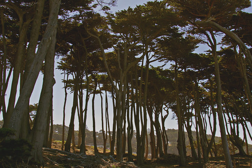 Lands End   San Francisco   by THEMACGIRL*