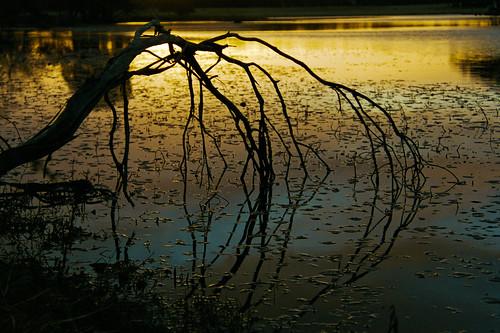 morning reflection film nature sunrise river landscape colorful pentax dramatic australia nsw