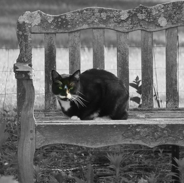 Watch Cat  (explore)