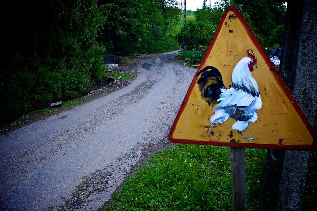 Uwaga na kury / Attention - chicken!