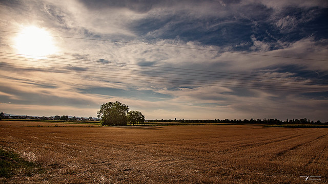 Landscape No. 5859