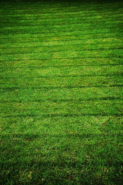 Perigord pelouse herbe green grass - atana studio
