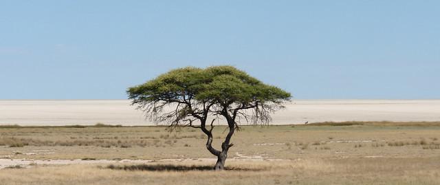 Namibia:  Etosha Pan