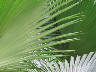 Palm Frond | by paulhami